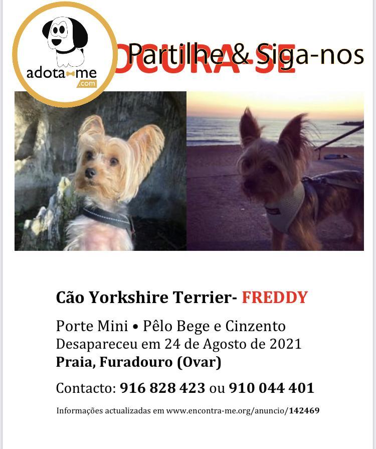 Cão - Aveiro