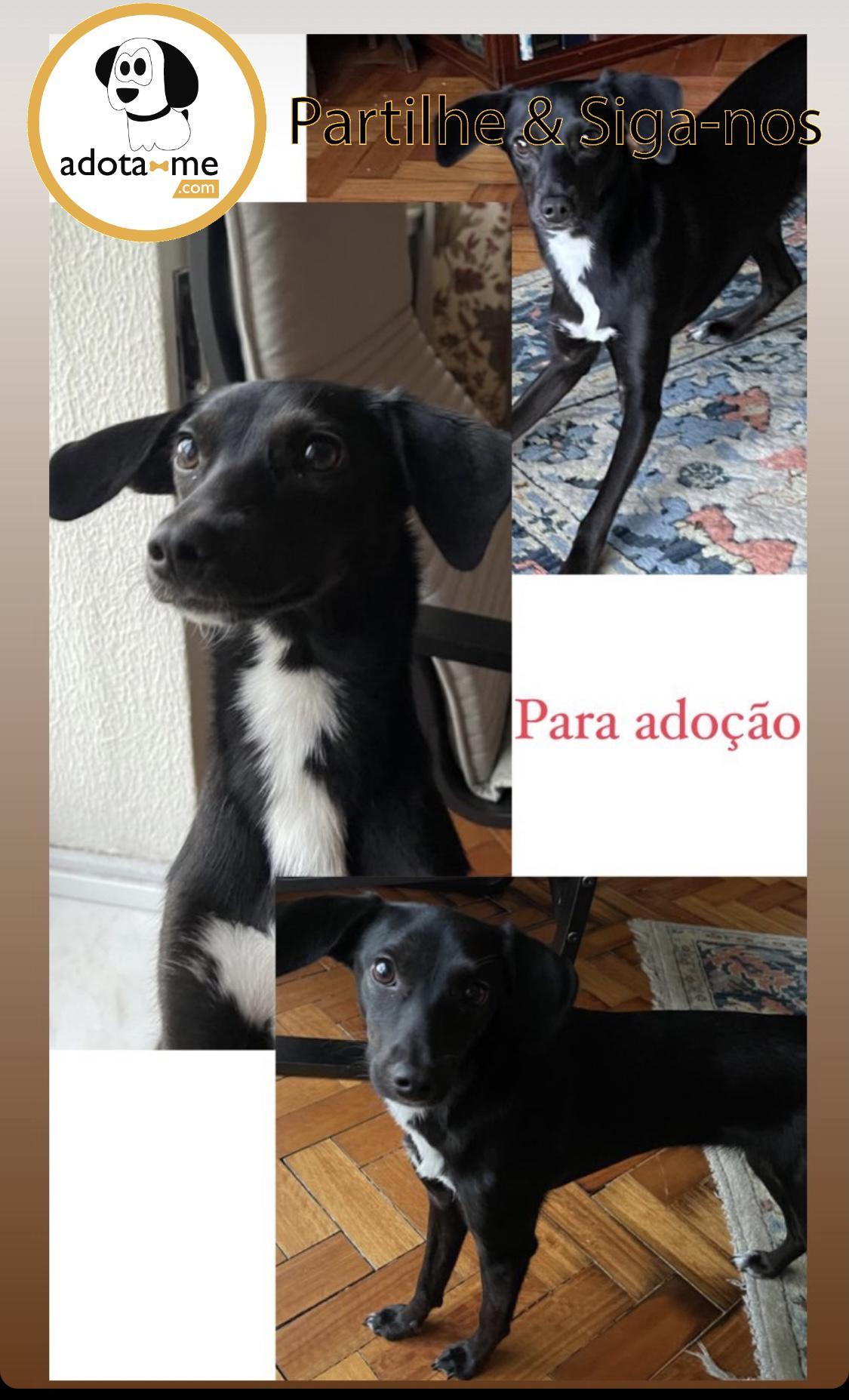 Cão - Porto